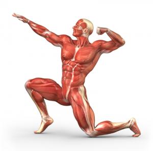 25 Anatomy Research Paper Topics - EssayEmpire