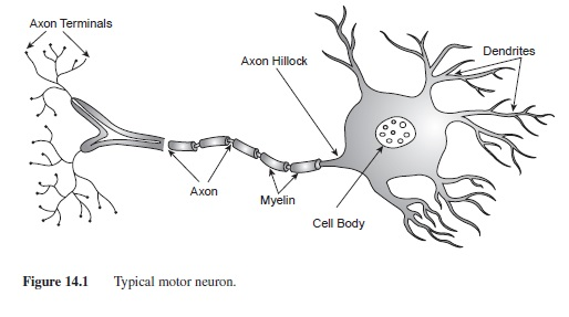 Neurotransmission research paper essayempire neurotransmission research paper f1 ccuart Gallery