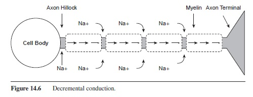 Neurotransmission research paper essayempire neurotransmission research paper f6 ccuart Gallery